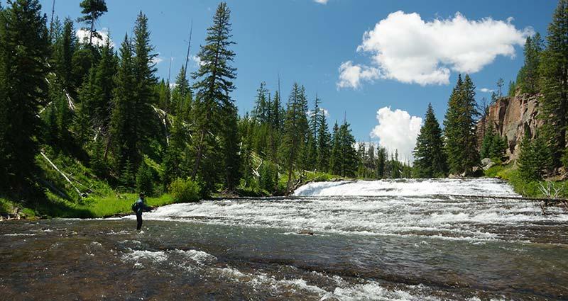 Angler fishing upper Gardner River below waterfalls.