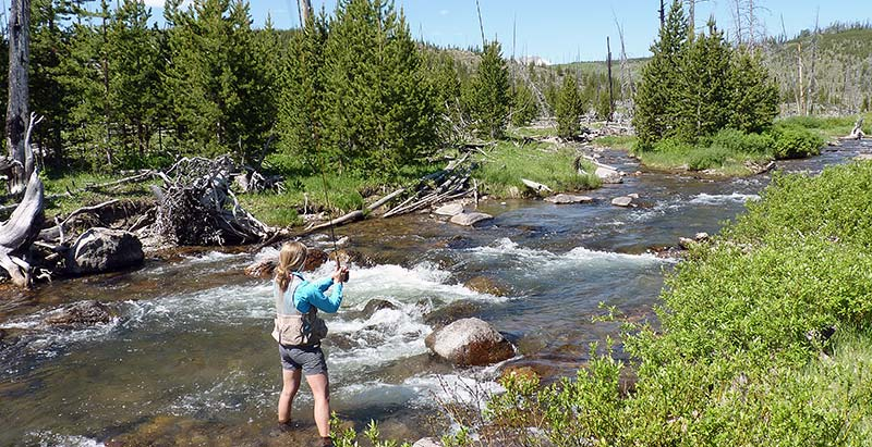 A beginner fly fishing in Yellowstone