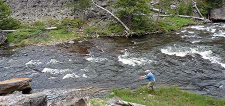 Angler fishing the Gibbon River in June