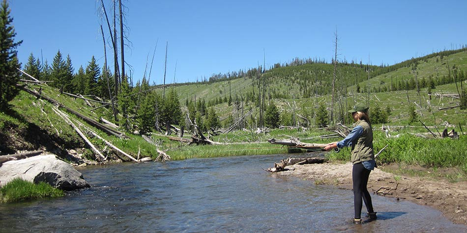 Yellowstone beginner fly fishing trip on a brook trout stream.