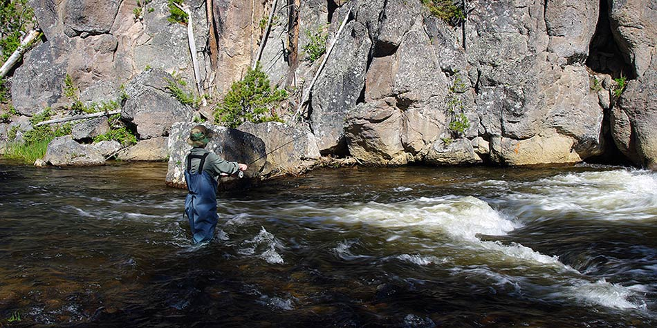 beginner fishing the Gibbon River on a Yellowstone beginner fly fishing trip