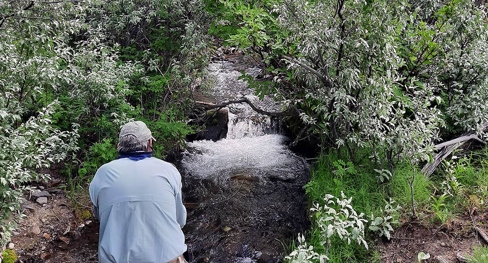 montana tiny mountain stream