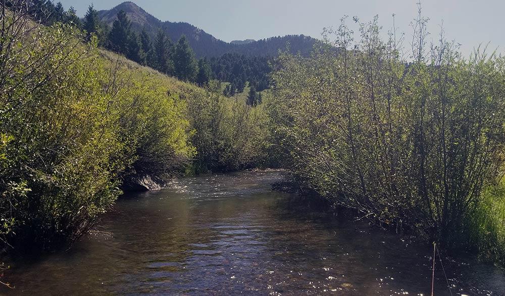 montana meadow stream