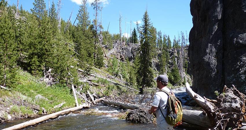 rough mountain creek in yellowstone